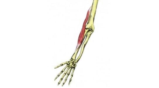 肘の外側痛い